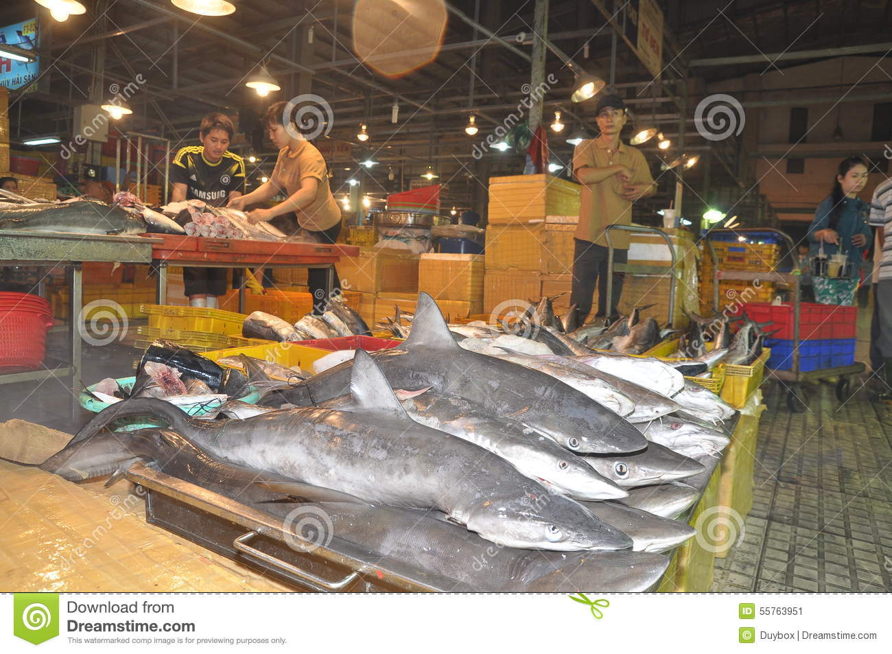 Sharks Are Waiting For Purchasing At The Binh Dien Wholesale Night