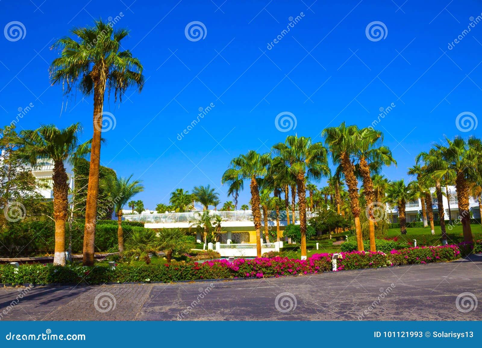 Sharm El Sheikh, Egypt - September 26, 2017: Buildings and Area Hotel Monter Carlo Resort Sharm El Sheikh