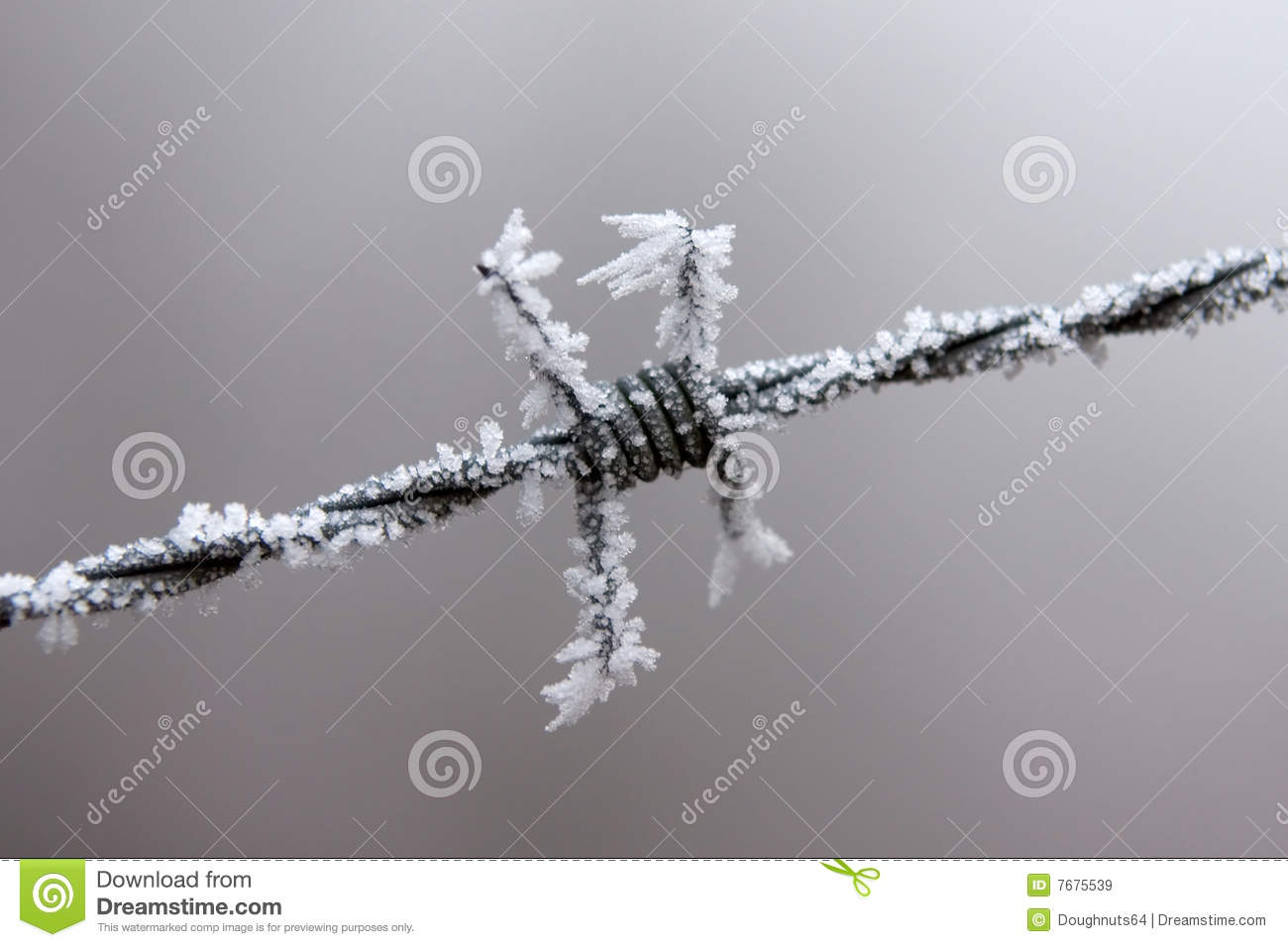 Frost on this barb of barbed wire on this very cold day in winter it