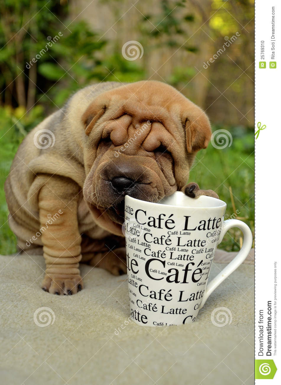 Sharpei puppy with coffee cup