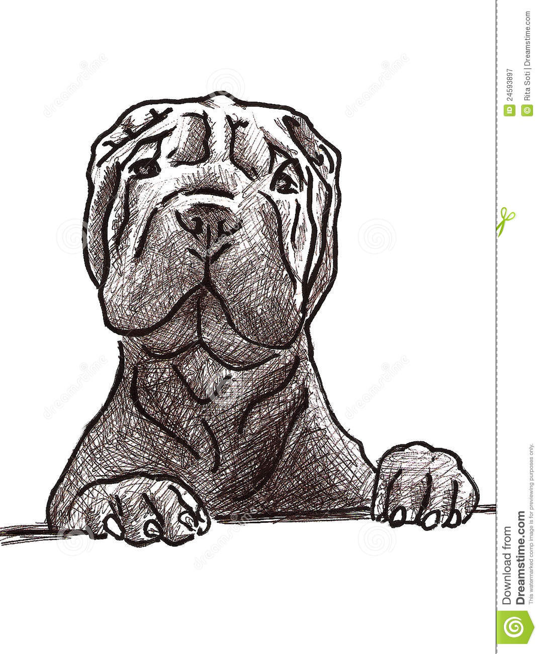 Sharpei Sketch Royalty Free Stock Photography Image