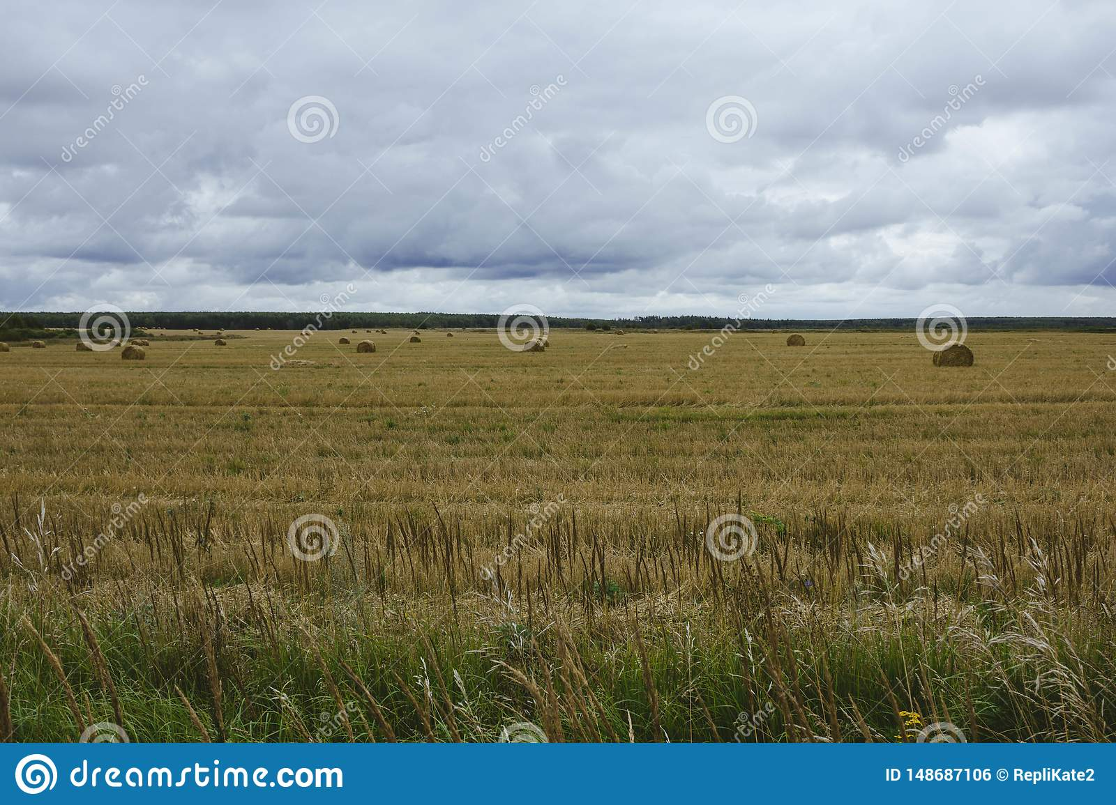 A sheaf of hay on yellow autumn field on a background cloudy sky. The harvest of hay. Autumn landscape in the field