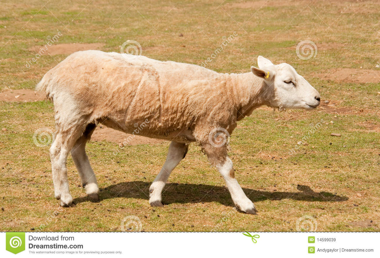 muslim singles in sheep springs I really want cute baby girl +2  my sect  just muslim  your report will be sent to the single muslim administration team for investigation.