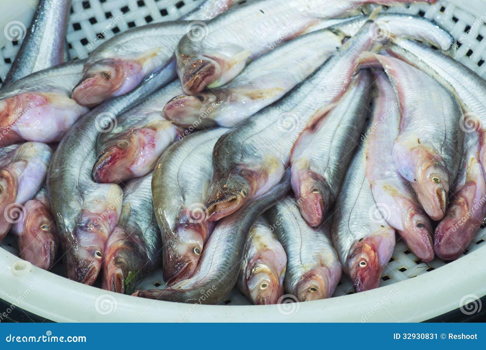 Sheatfish sale at local market,Thailand (Siluridae, Siluriformes).