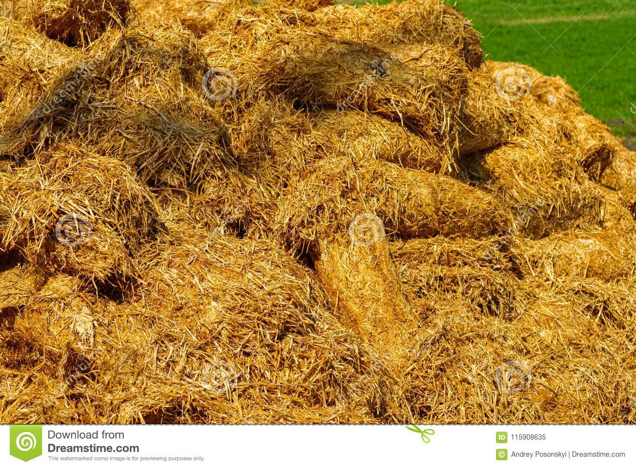 Sheaves of straw in agriculture