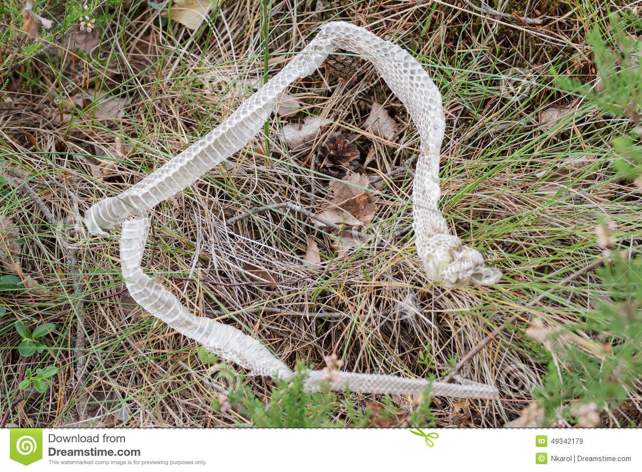how to help snake shed