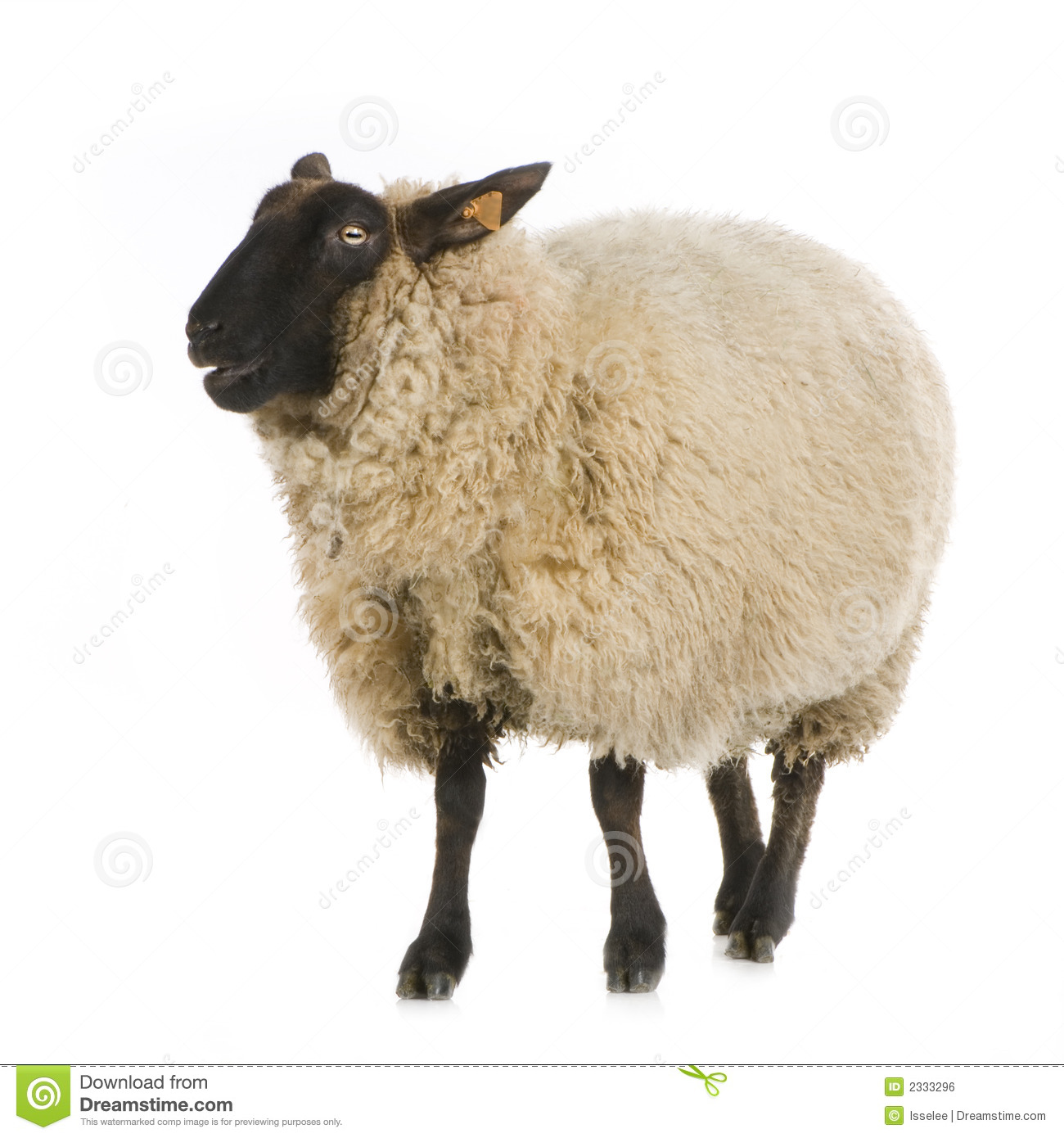 sheep royalty free stock image image 2333296 ram clip art in black and white ram clip art related to softball