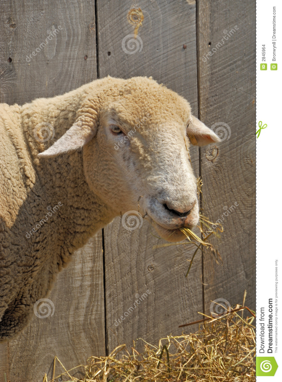 How To Draw A Sheep Eating Grass