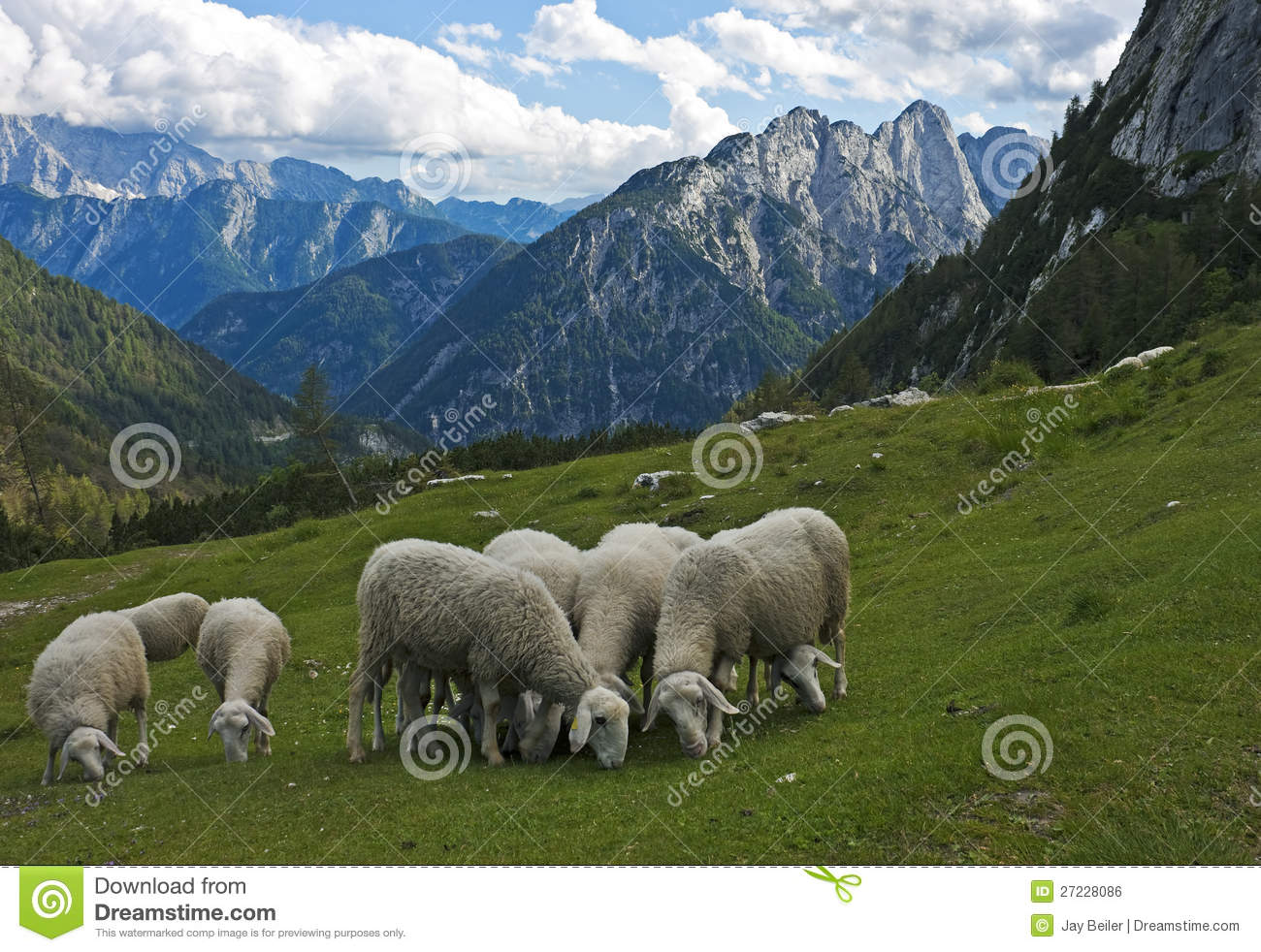 Sheep in the Alps, Slovenia