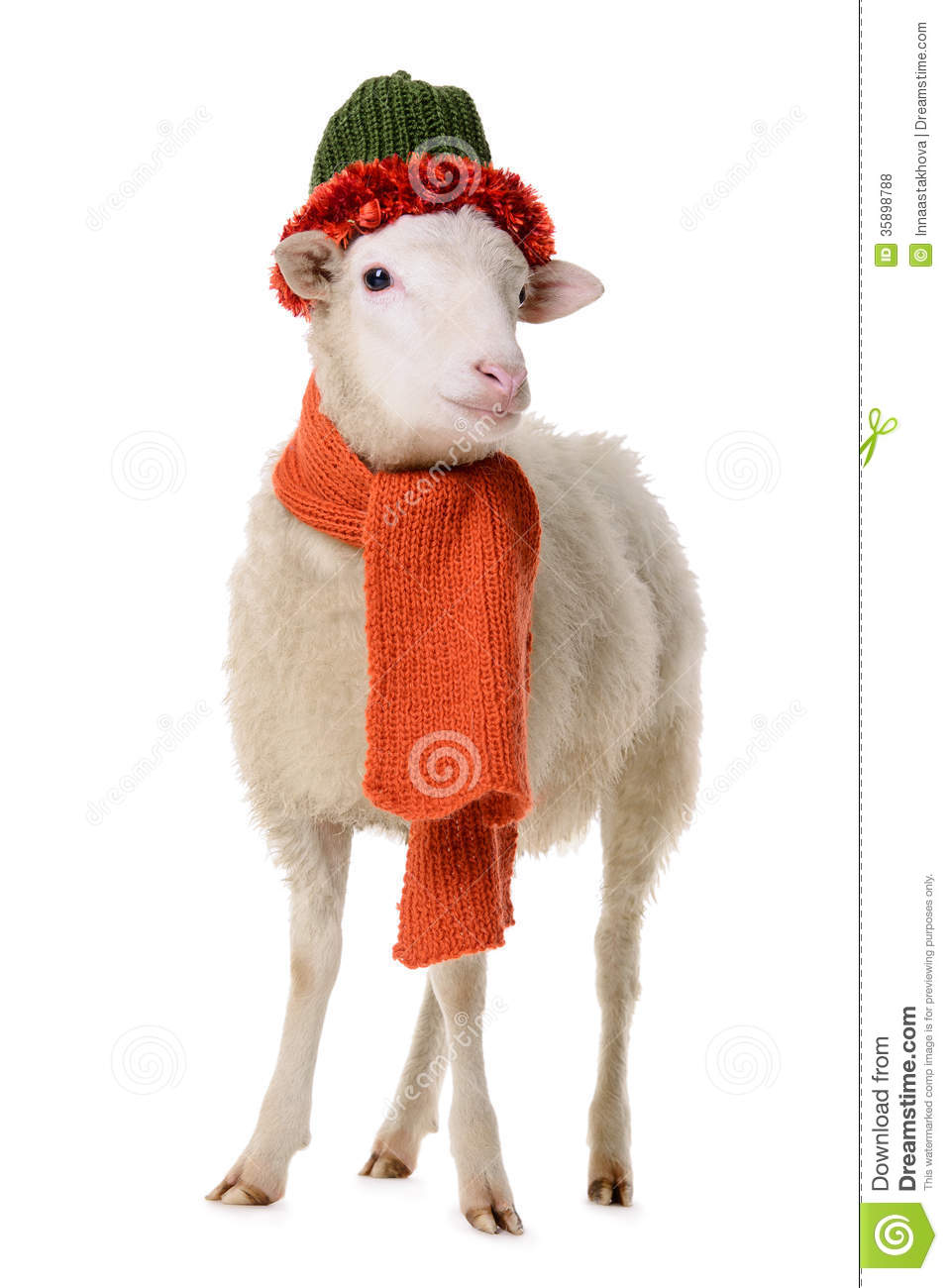 Sheep In Clothes Royalty Free Stock Photos Image 35898788