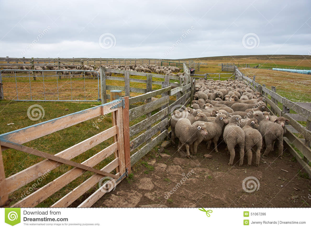 Sheep Corral In The Late Afternoon Sun Stock Photo - Image: 43792475