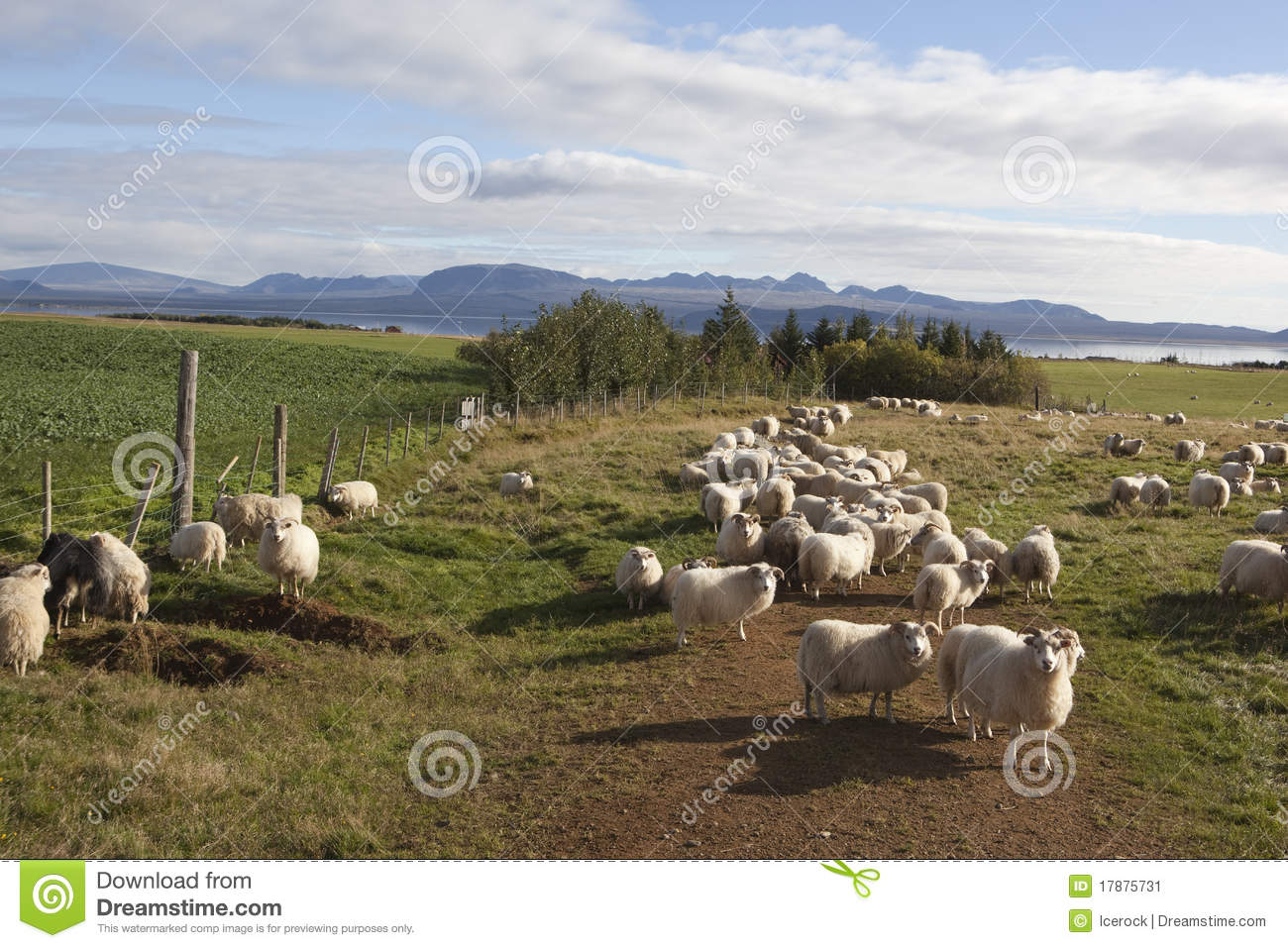 Sheep In Corral Stock Image - Image: 36233191