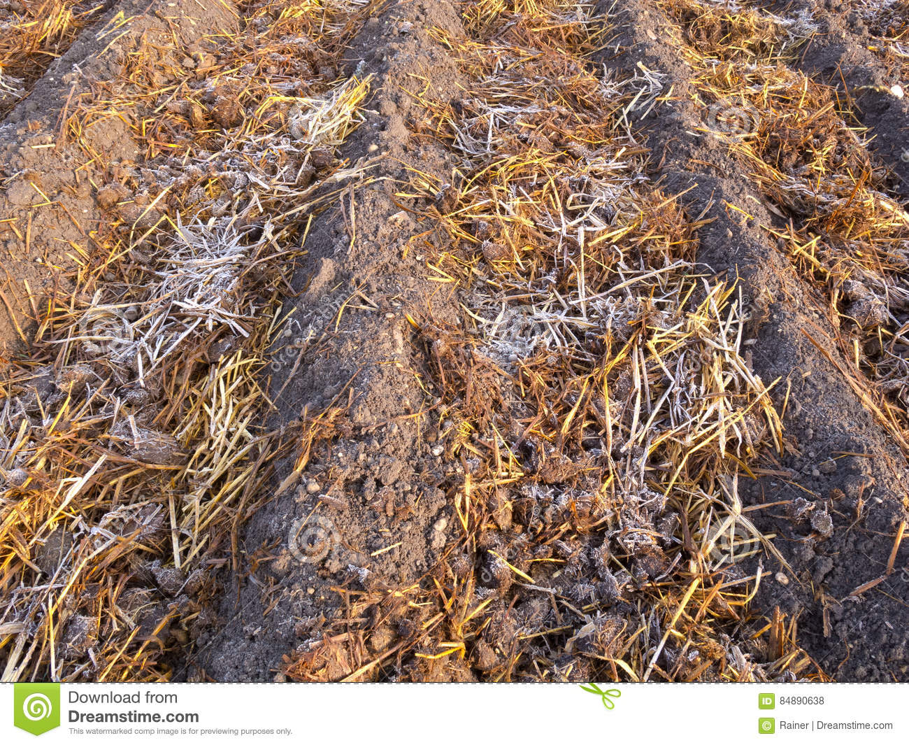 Sheep Dung On Vegetable Garden Soil With Rime Stock Photo - Image of ...