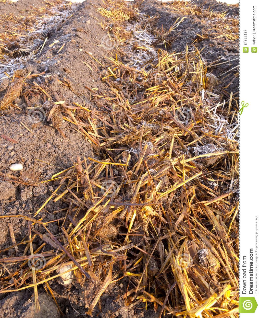 Sheep Dung On Vegetable Garden Soil With Rime Stock Image - Image of ...