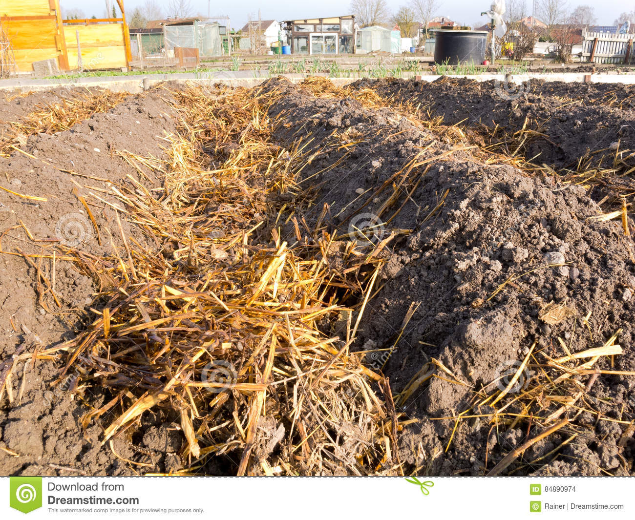 Sheep Dung On Vegetable Garden Soil Stock Photo - Image of garden ...