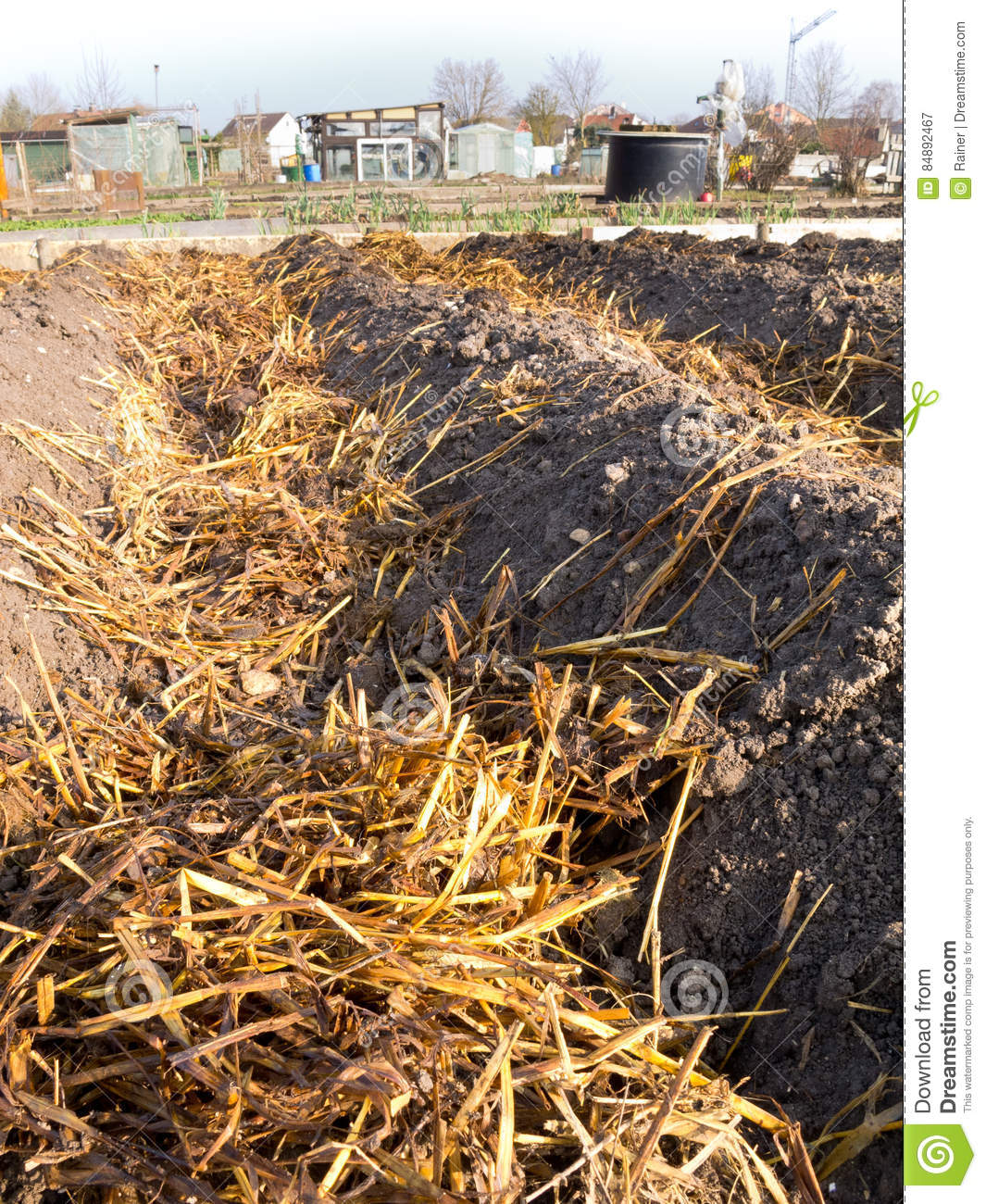 Sheep Dung On Vegetable Garden Soil Stock Image - Image of natural ...