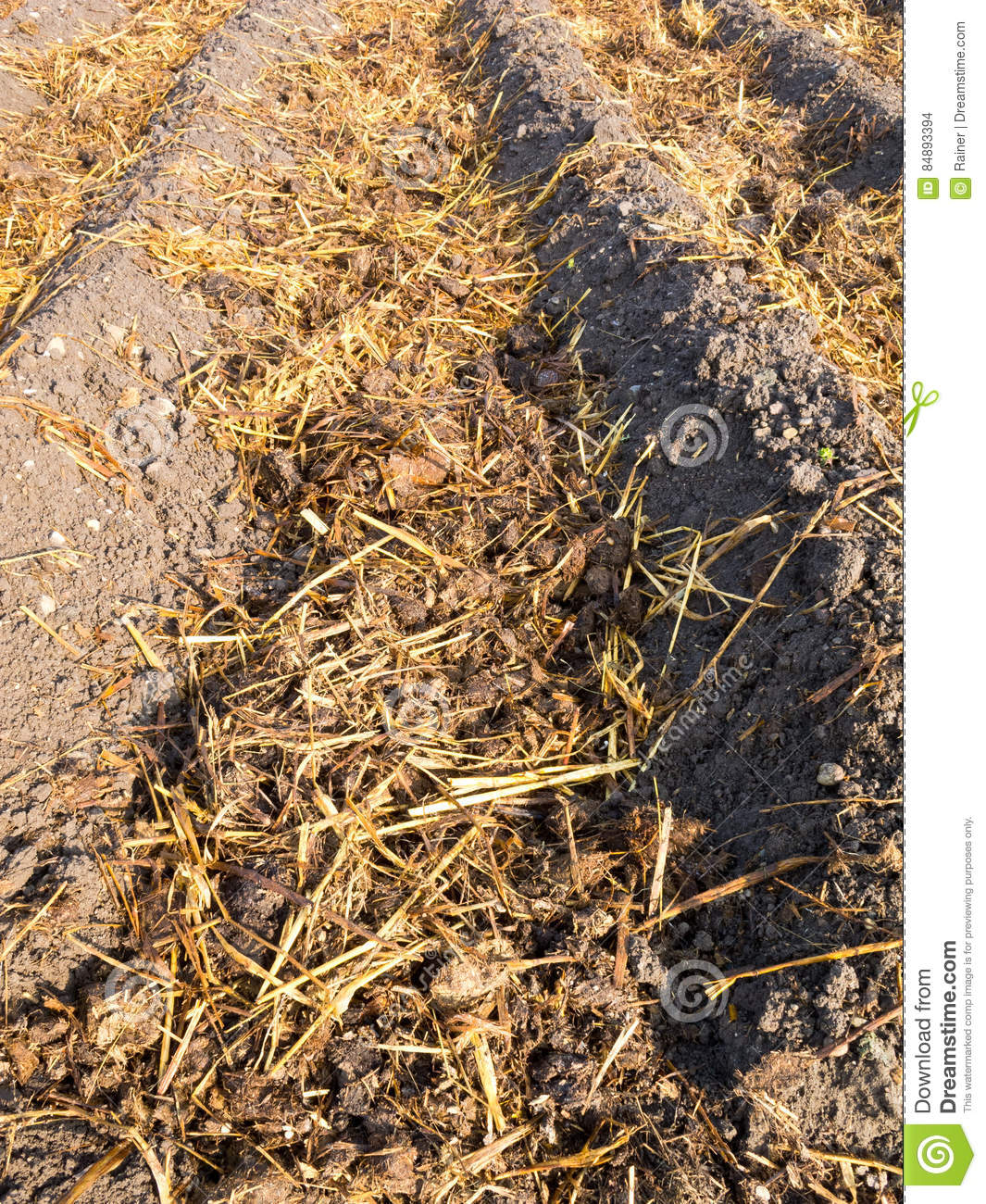 Sheep Dung On Vegetable Garden Soil Stock Photo - Image of patch ...