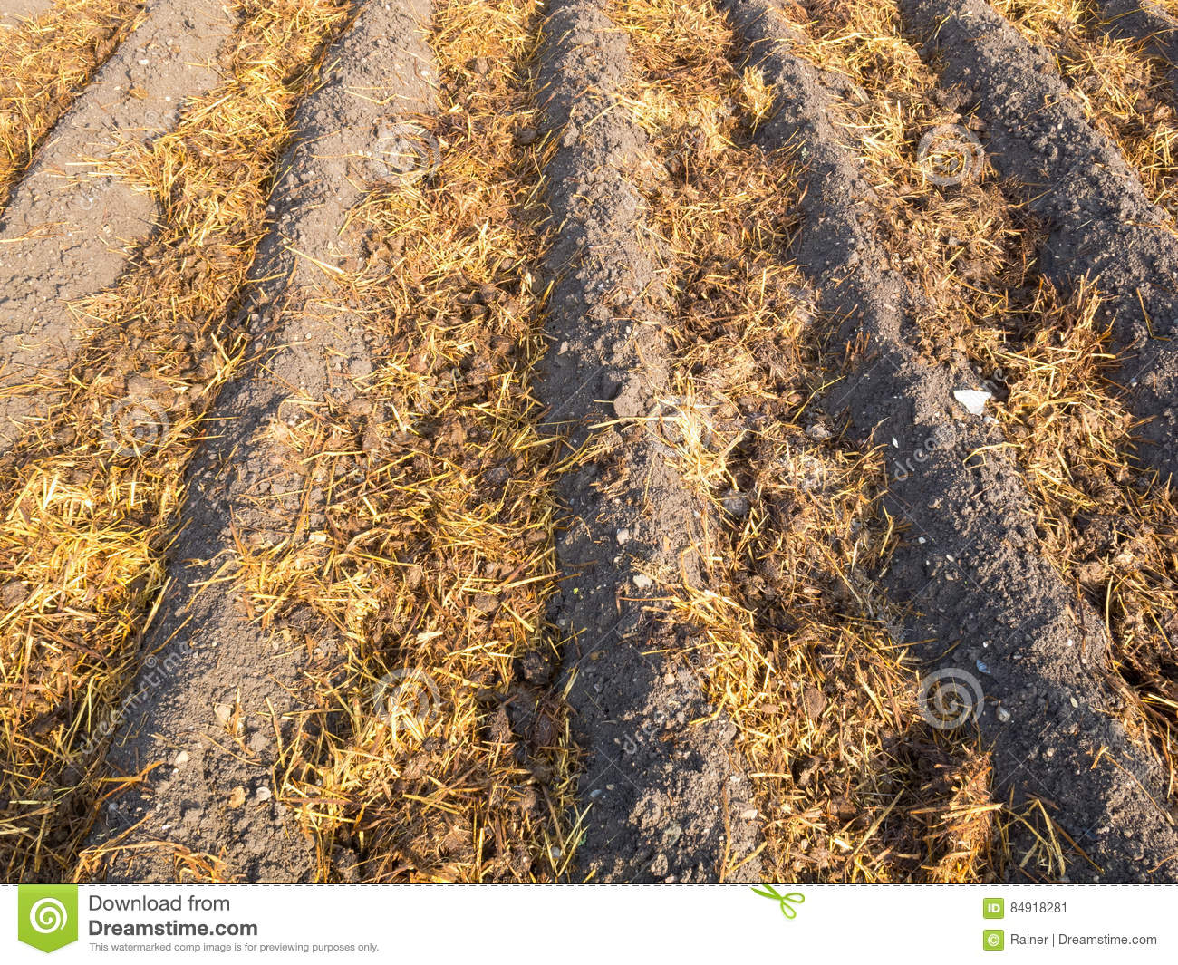 Sheep Dung On Vegetable Garden Soil Stock Image - Image of dung ...