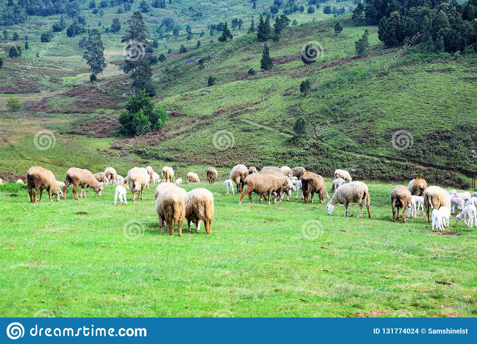 It is a beautiful sheep farm houselocated in mannavanurkodaikanal tamilnaduindia beautiful grass valley and the lake view also nice place to spend time