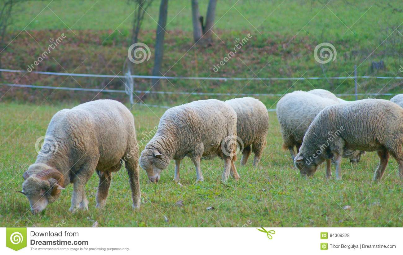 sheep ranch online dating Gultecom will be load in a few seconds | click here to go to gultecom.