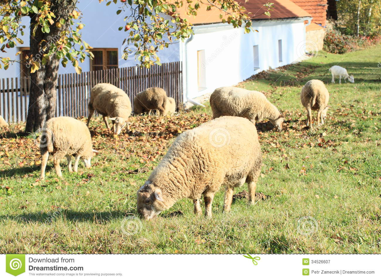 sheep and goat feed lot business plan