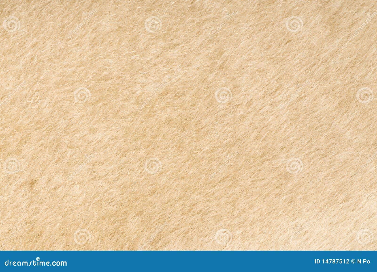 Sheep Fur Texture Stock Photography Image 14787512