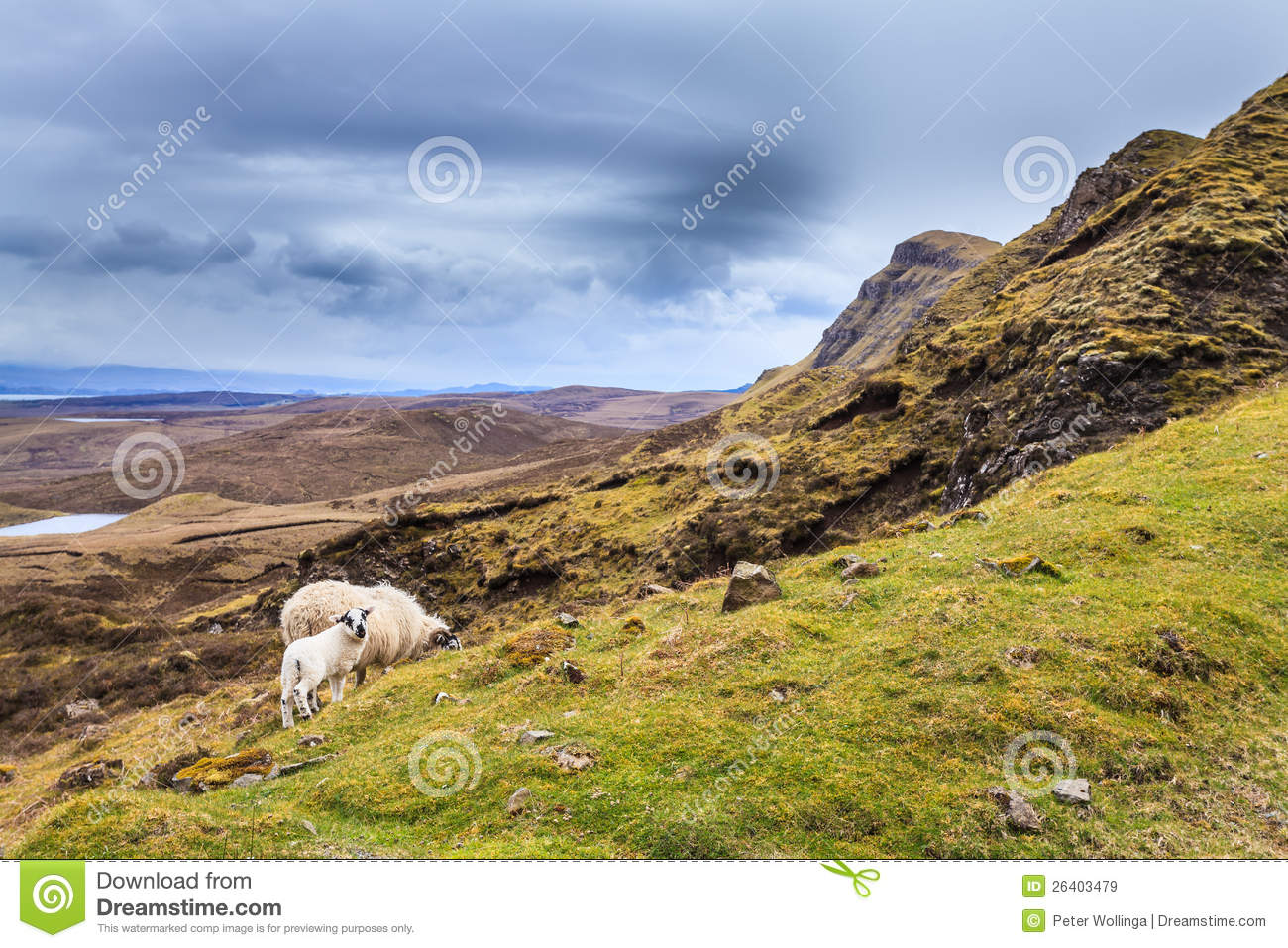 Sheep grazing in the highlands