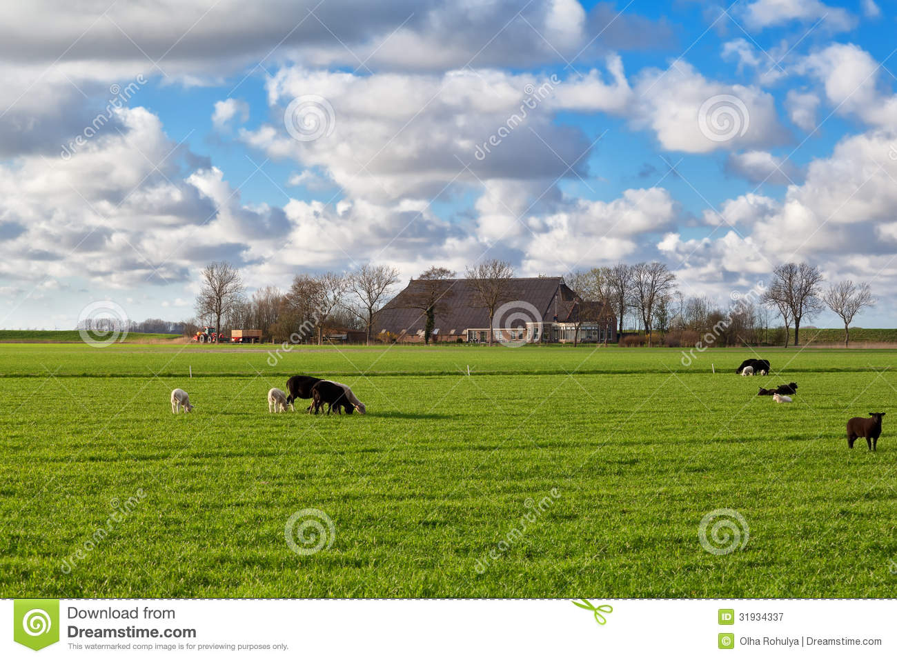 Sheep grazing on pasture royalty free stock photography Farm house netherlands