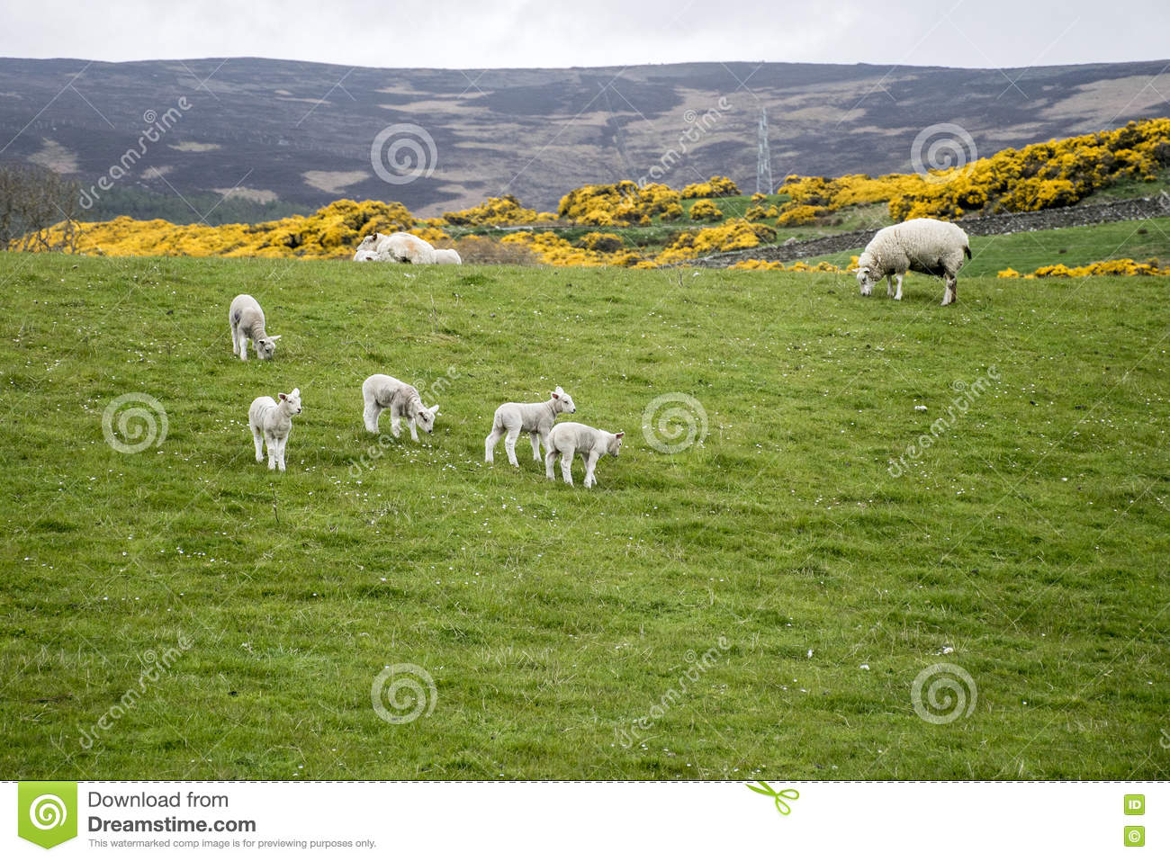 Free Images : landscape, nature, grass, group, field, farm, meadow ...