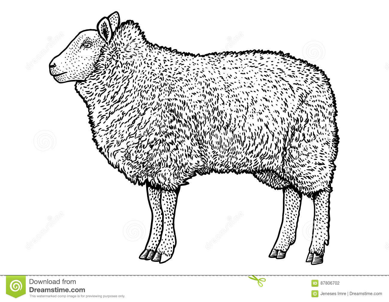 Line Drawing Images Of Sheep : Sheep illustration drawing engraving ink line art
