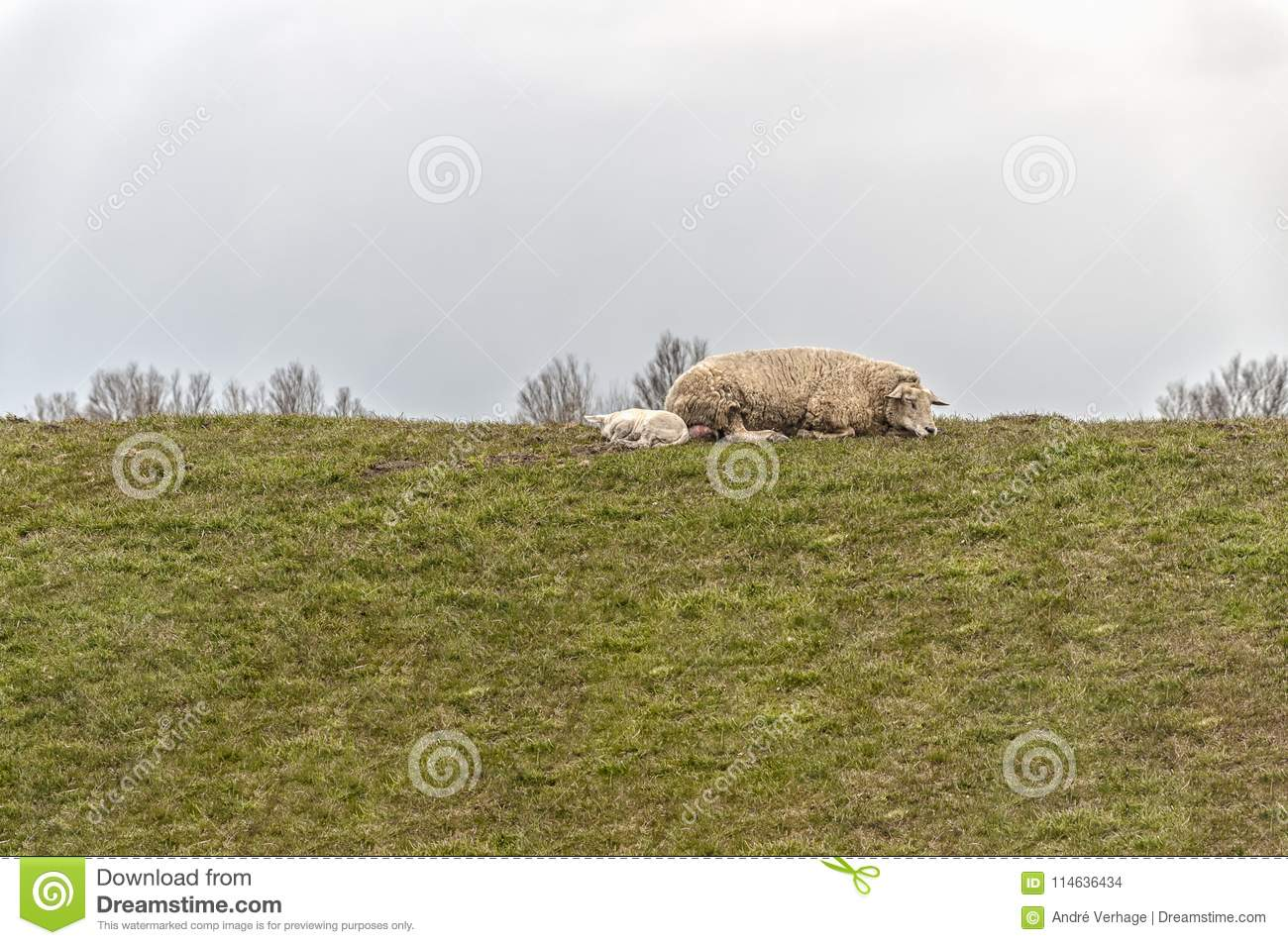 A sheep and lamb on the edge of a meadow