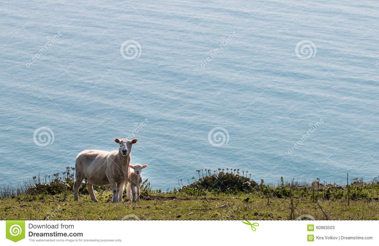 Sheep and lamb standing on a pasture