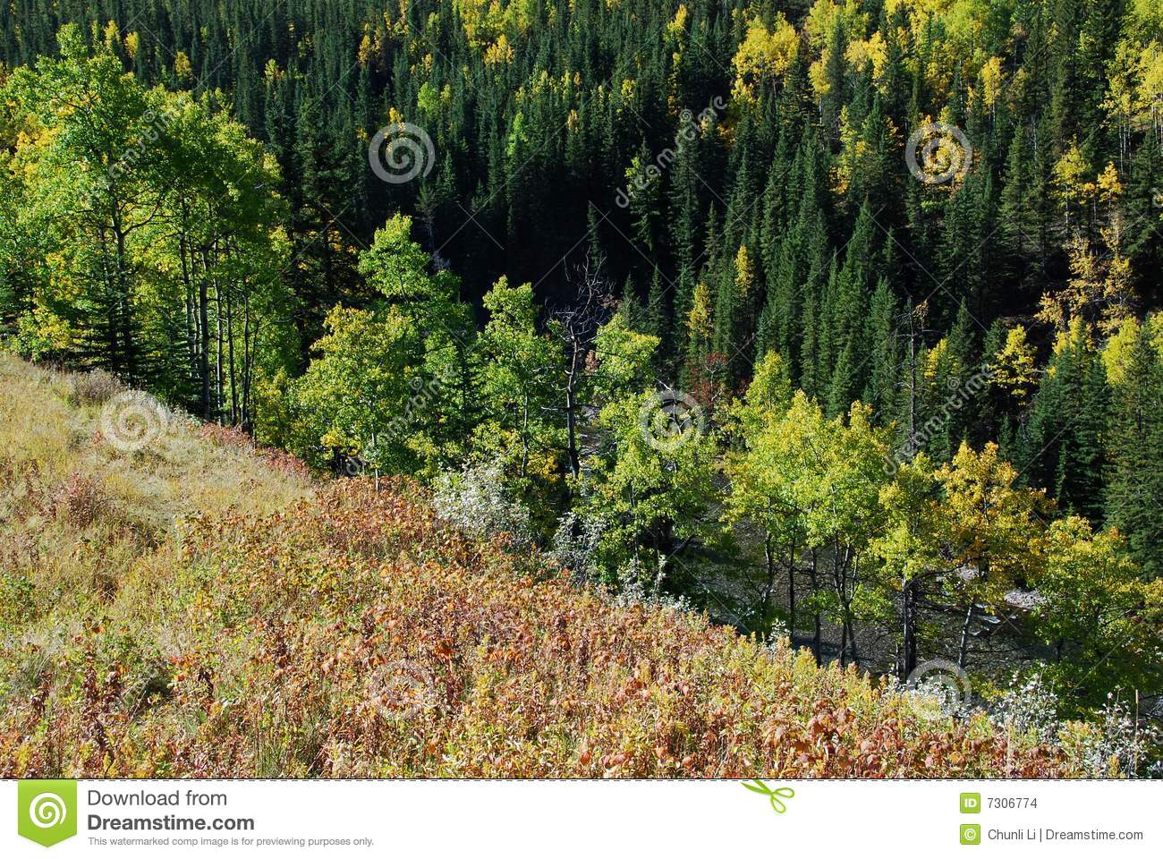 Sheep River Valley In Autumn Stock Photo Image 7306774