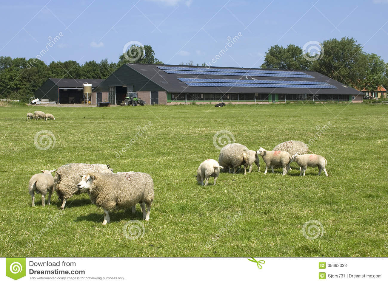 Sheep and solar panels on a farm, Netherlands