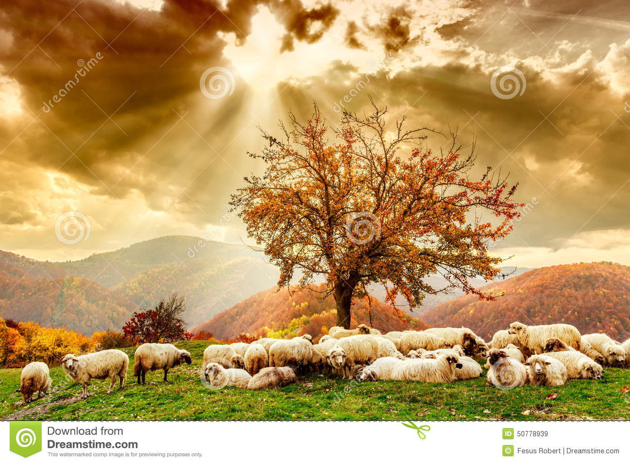 Sheep under the tree and dramatic sky