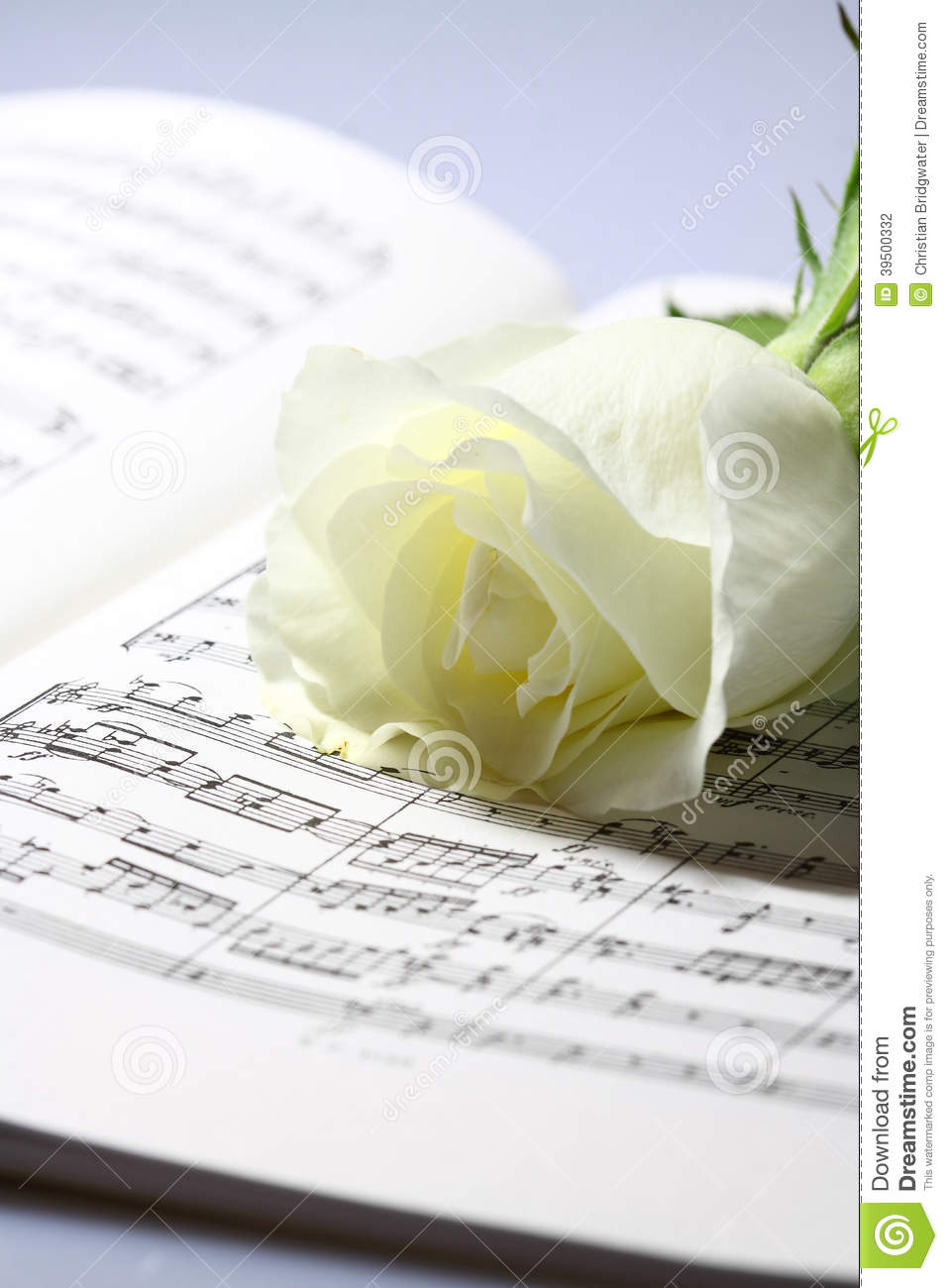 Sheet music white rose A