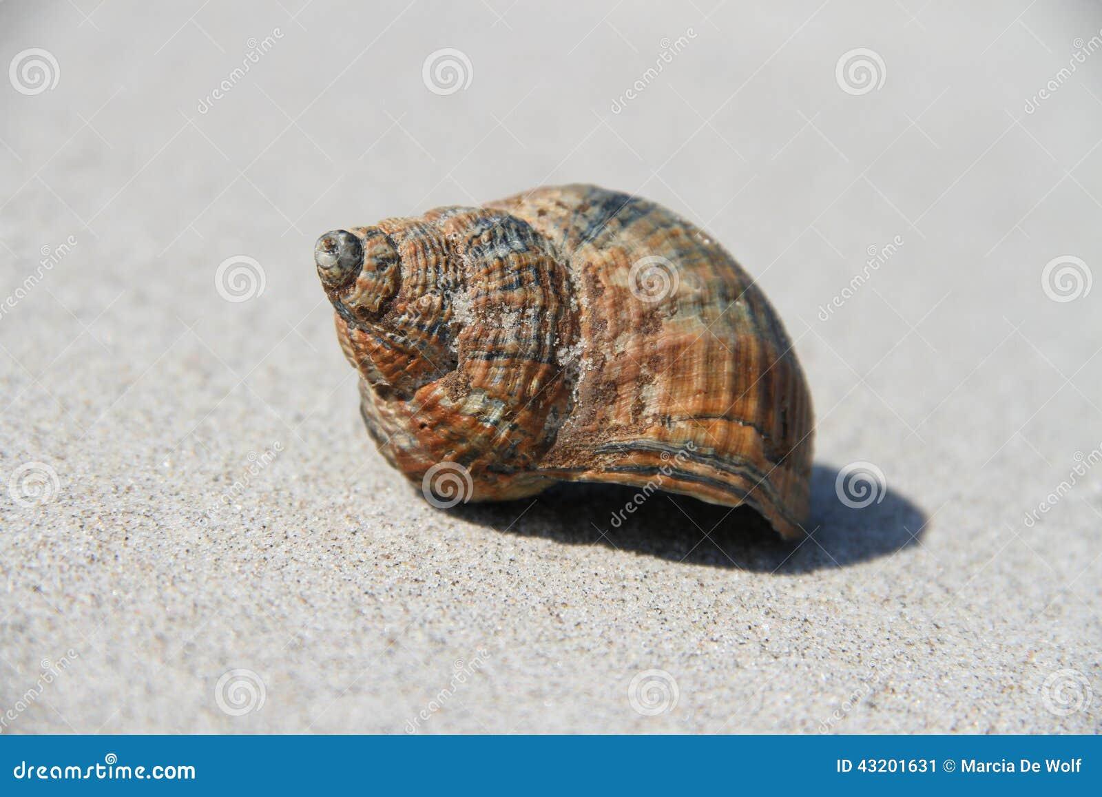 Download Shell fotografering för bildbyråer. Bild av denmark, sand - 43201631
