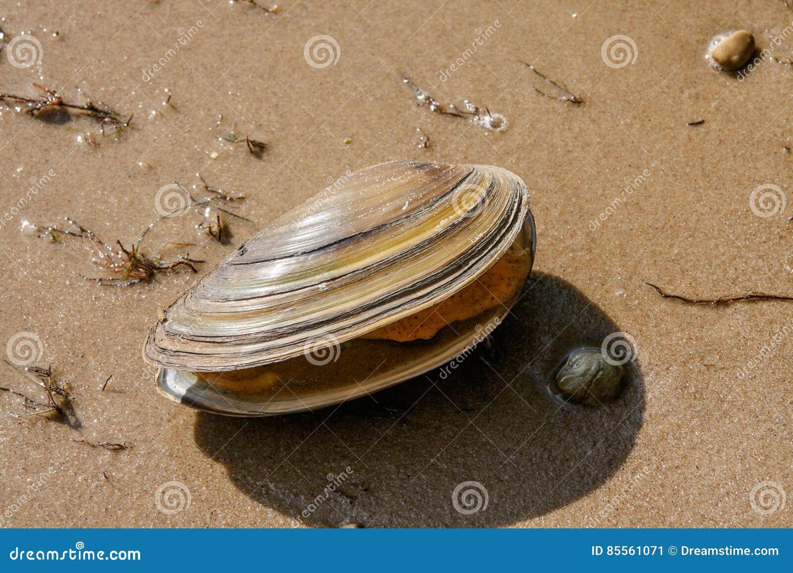 Shell auf einem See stützen unter
