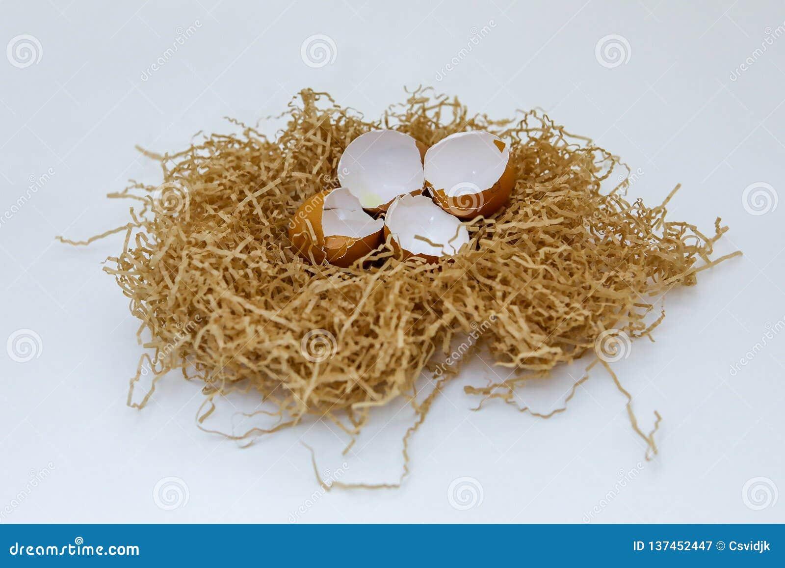Shell av ägg i redet