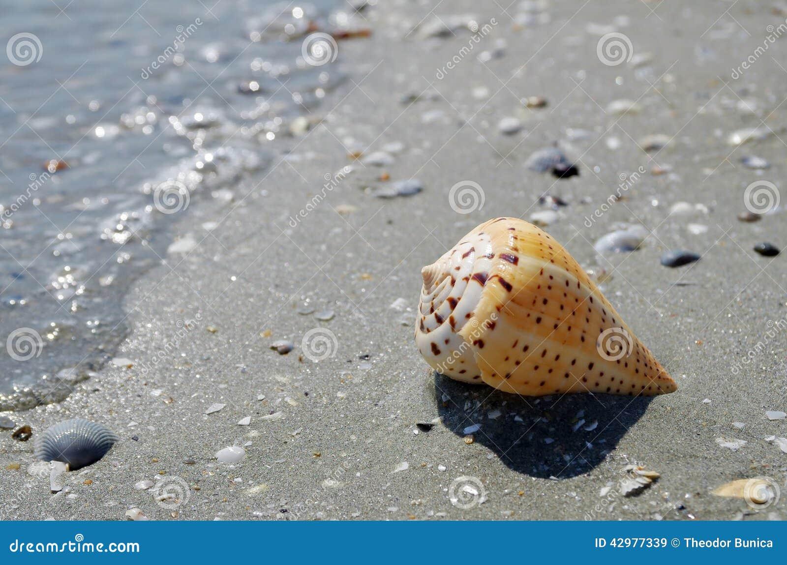 Seascape with shell on the beach. Summer, sea, sun, beach, fine sand - Black Sea, landmark attraction in Romania