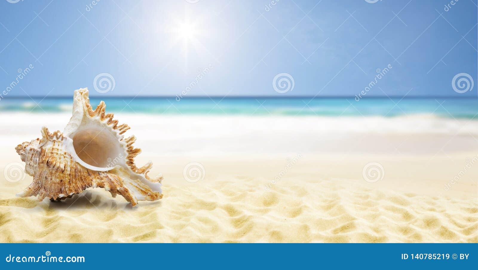 Shell bij een strand