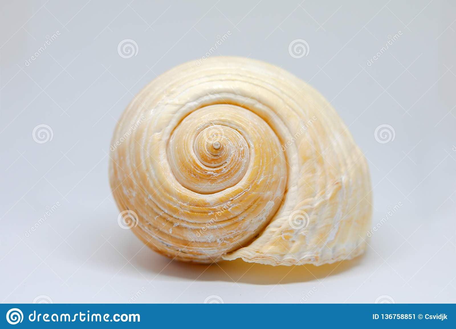 Beautiful seashell close up + transparent background, png
