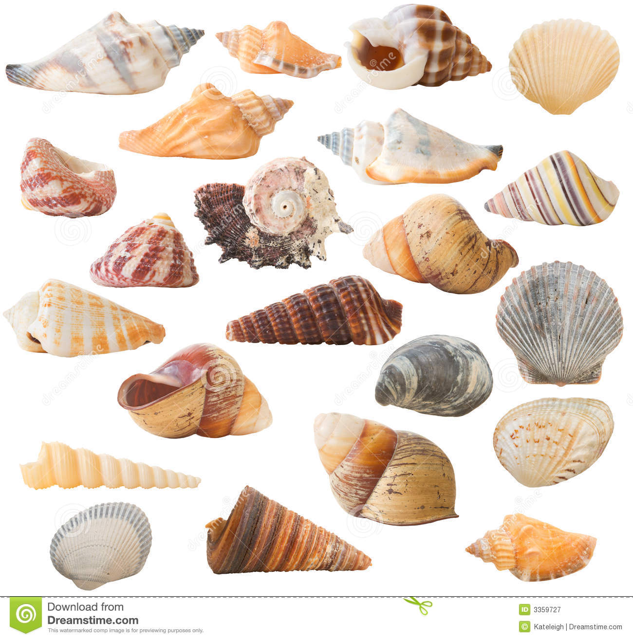 Shell collection isolated royalty free stock photography - Types of seashells for kids ...