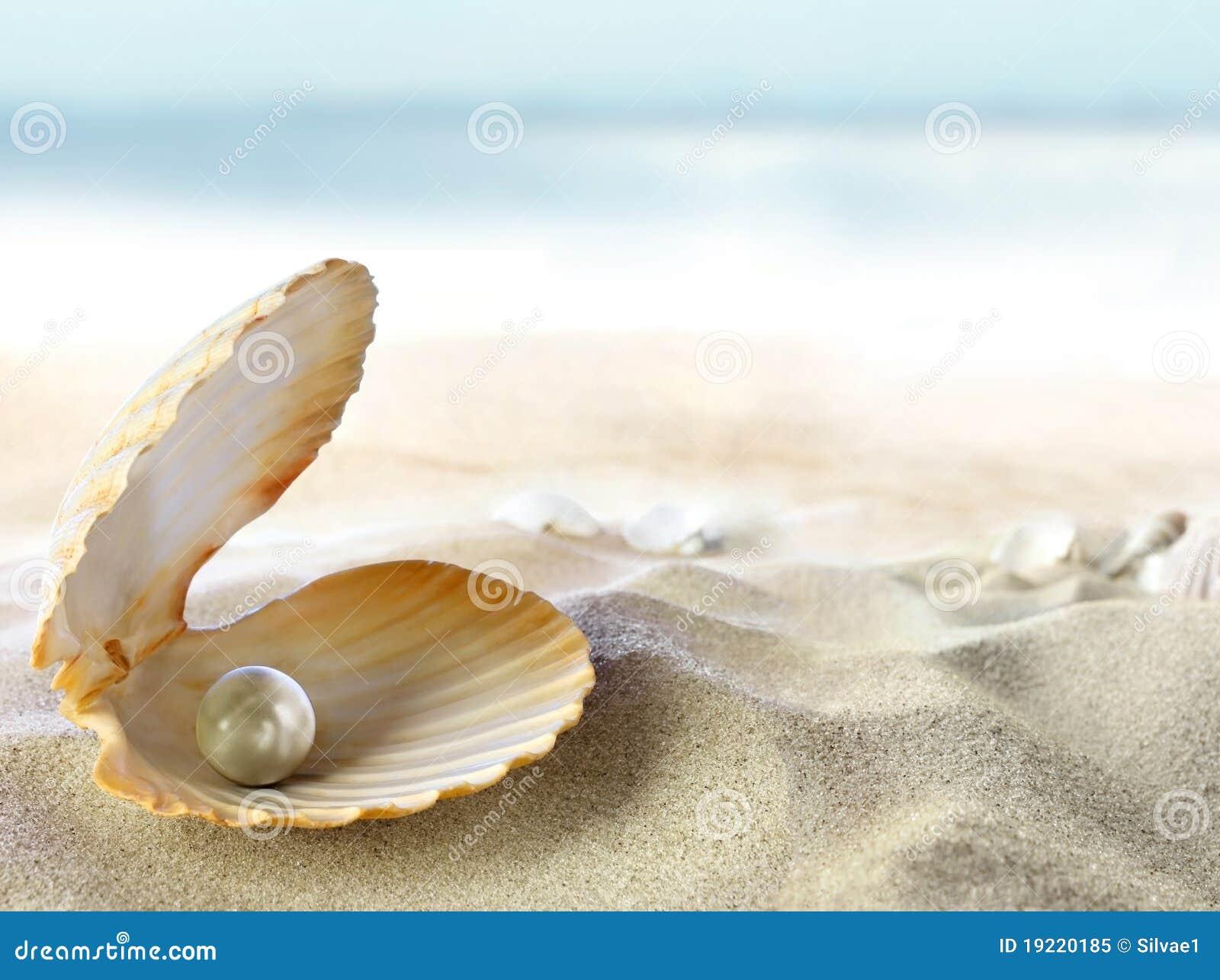 Shell con una perla