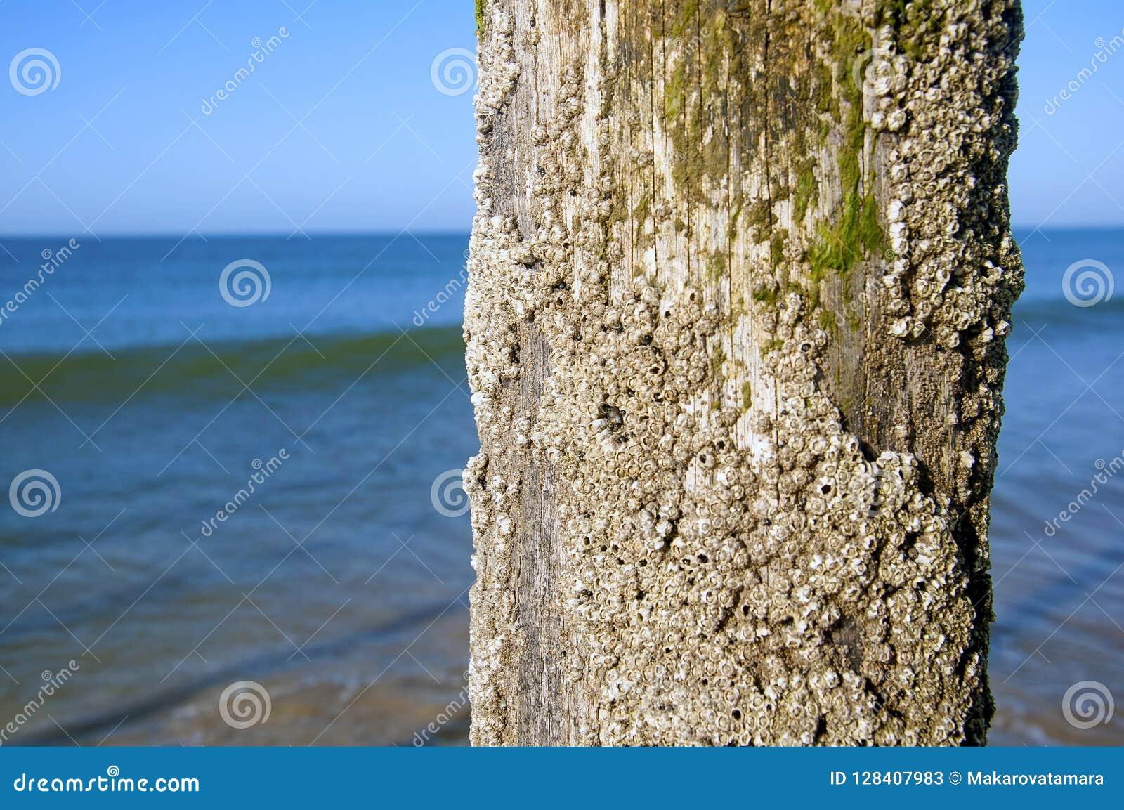 Shell a couvert le tronc dans le bord de mer