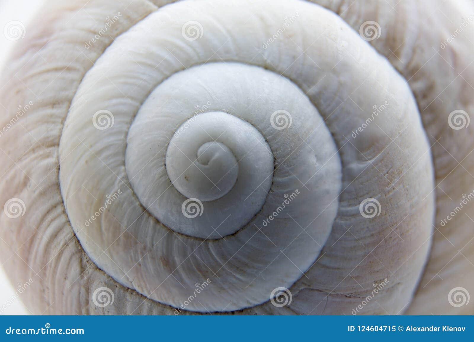 Shell d un plan rapproché d escargot de raisin