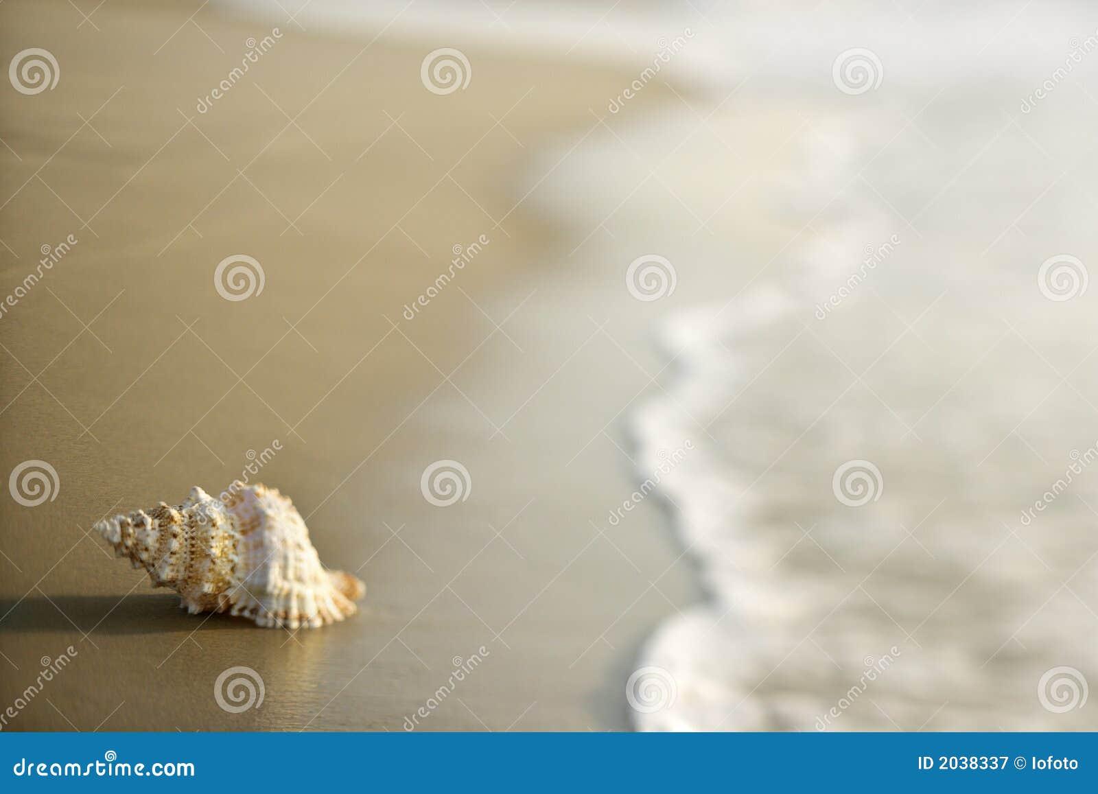 Shell de la concha en la arena con las ondas.