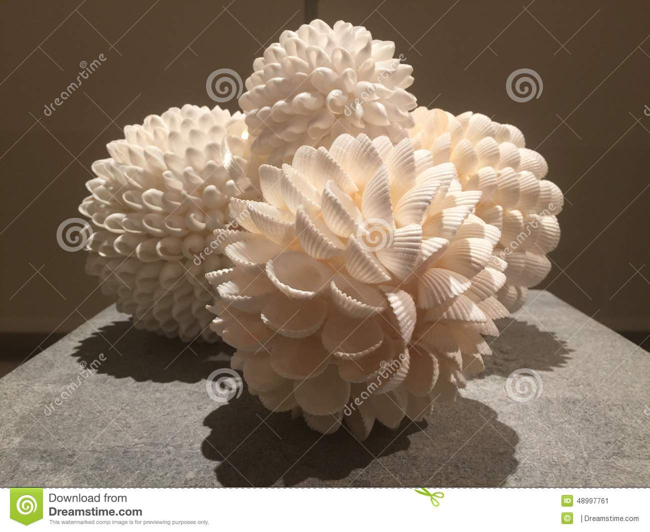 Shell decorations 3 0 stock photo image 48997761 for What are shells made of