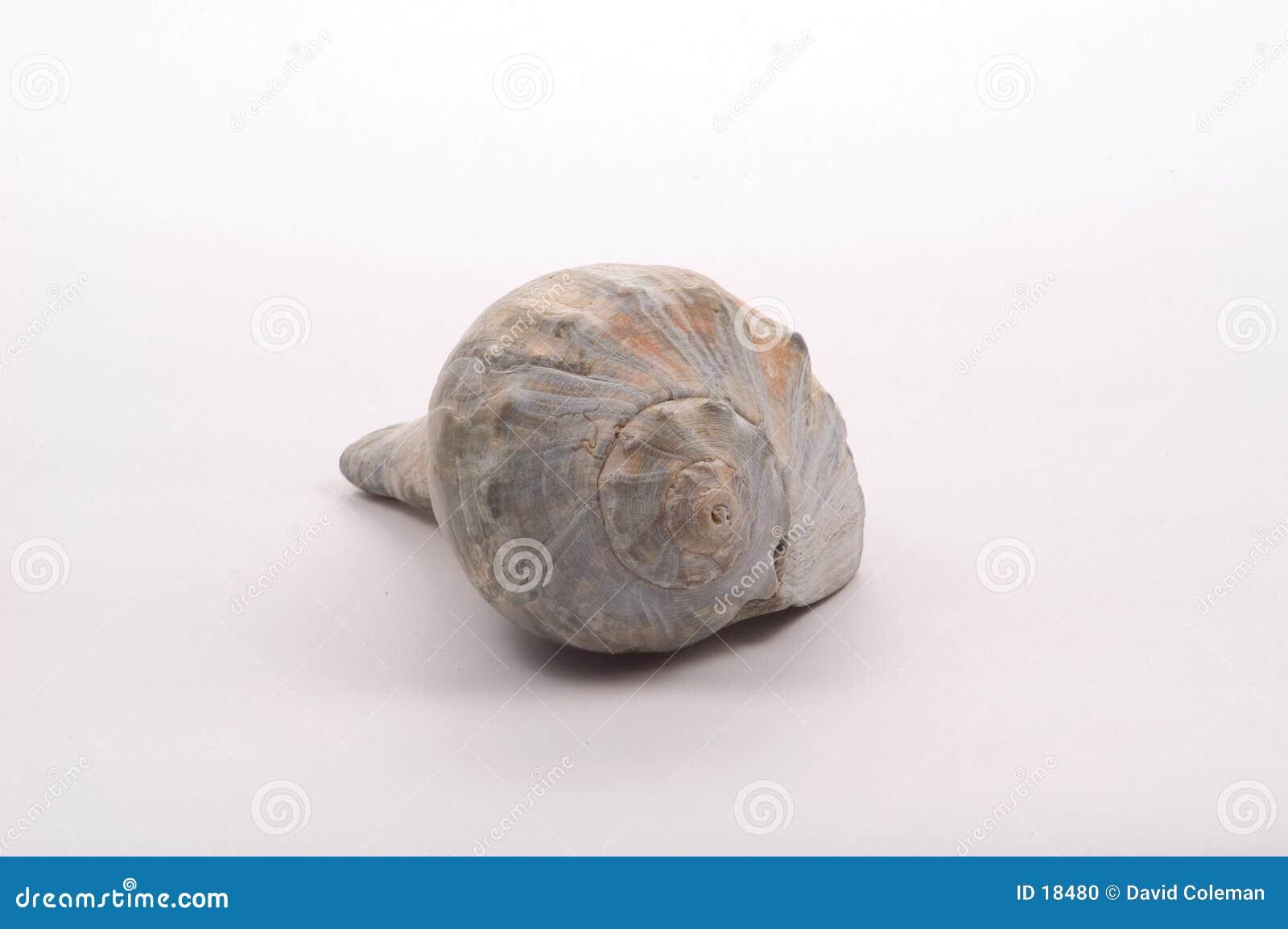 Shell del mar