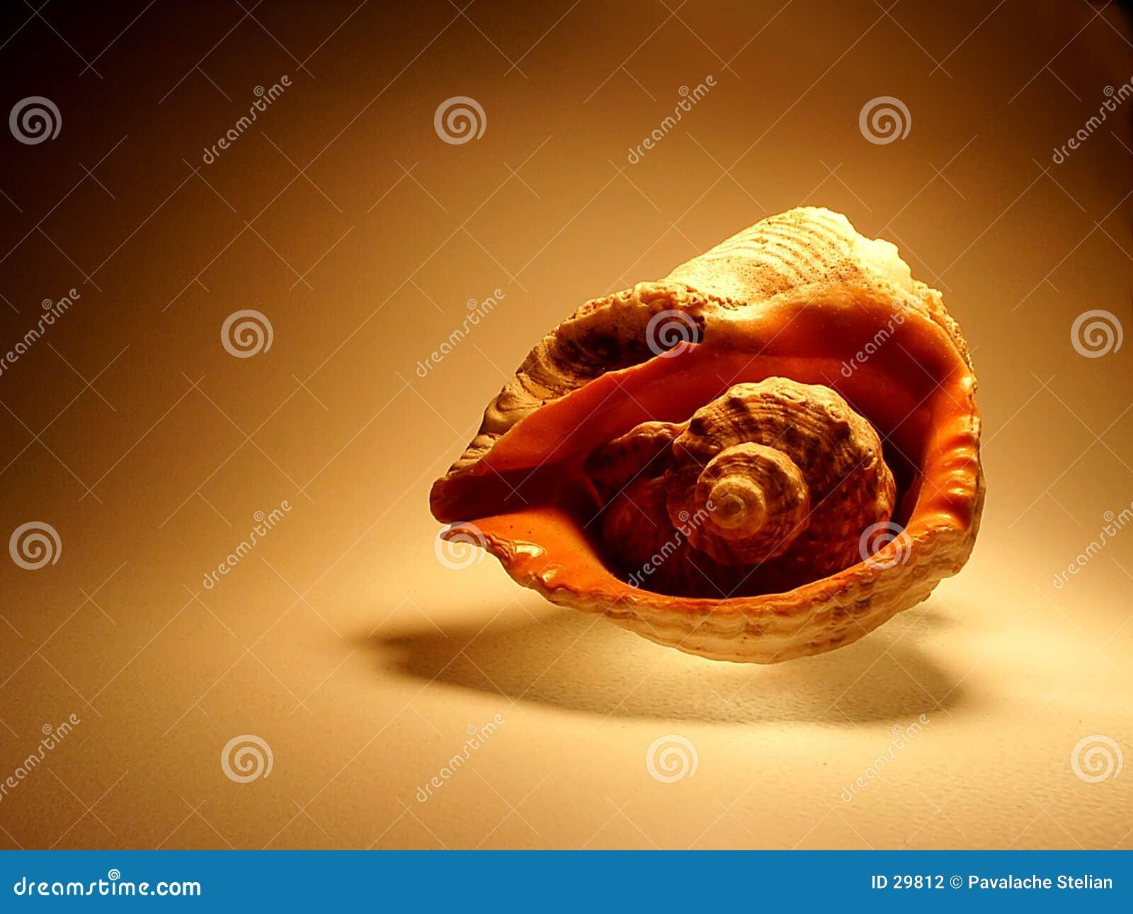 Shell del mar en el fondo de Brown